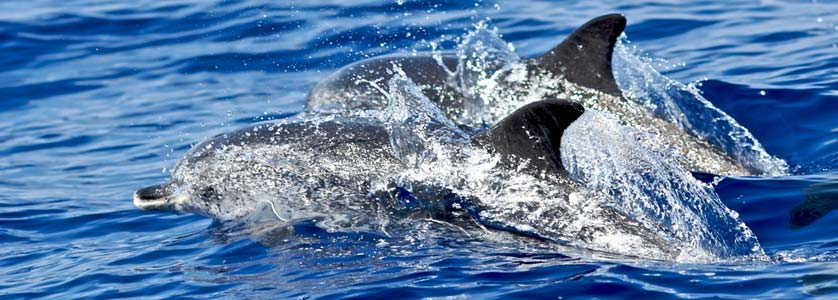 Boat tours and dolphin watching in Madeira