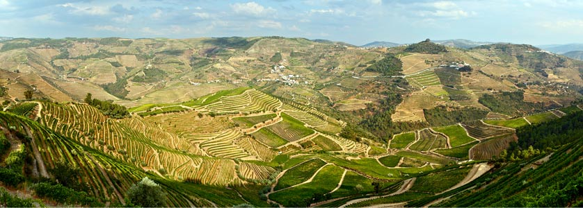 Panoramic views across the Douro's Vineyards